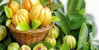 Garcinia cambogia.Fruit4